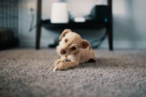 Carpet Cleaning Tips Maintaining your Carpet