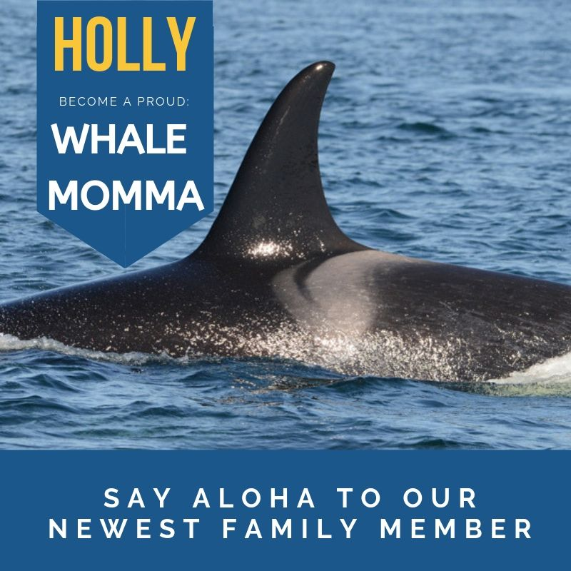 Check out our new adopted whale