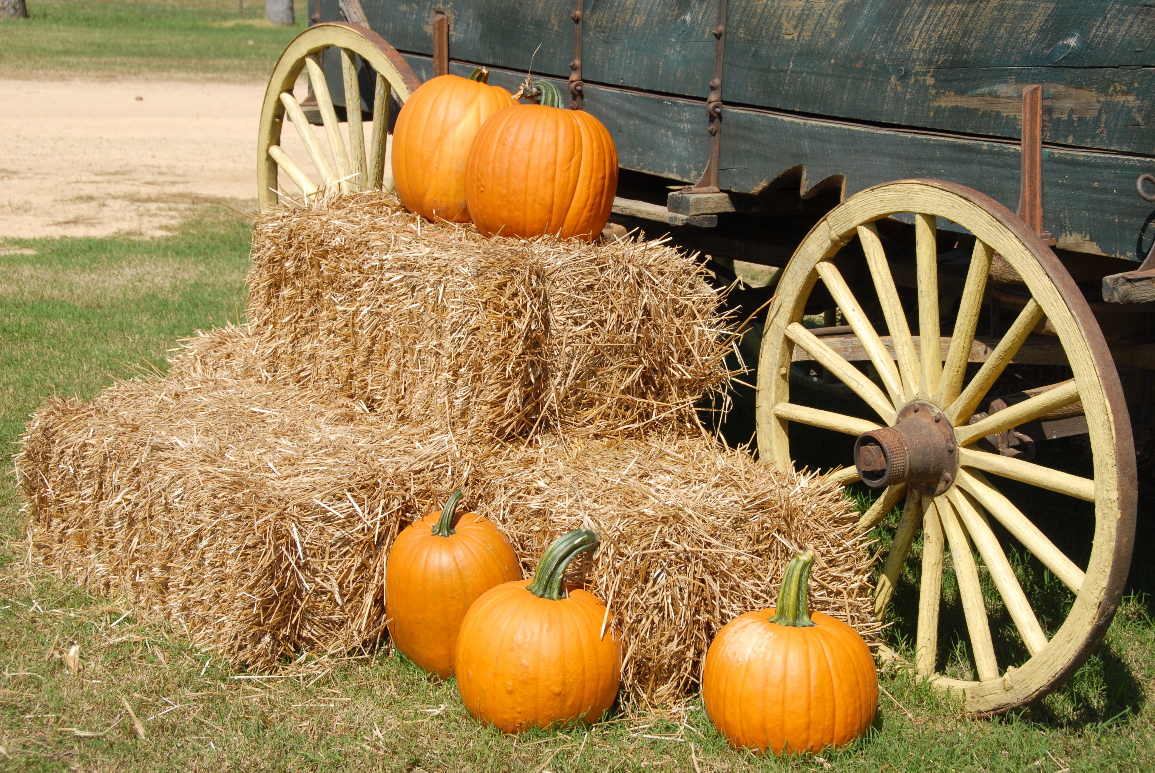 While your house is getting cleaned visit the OC pumpkin farms