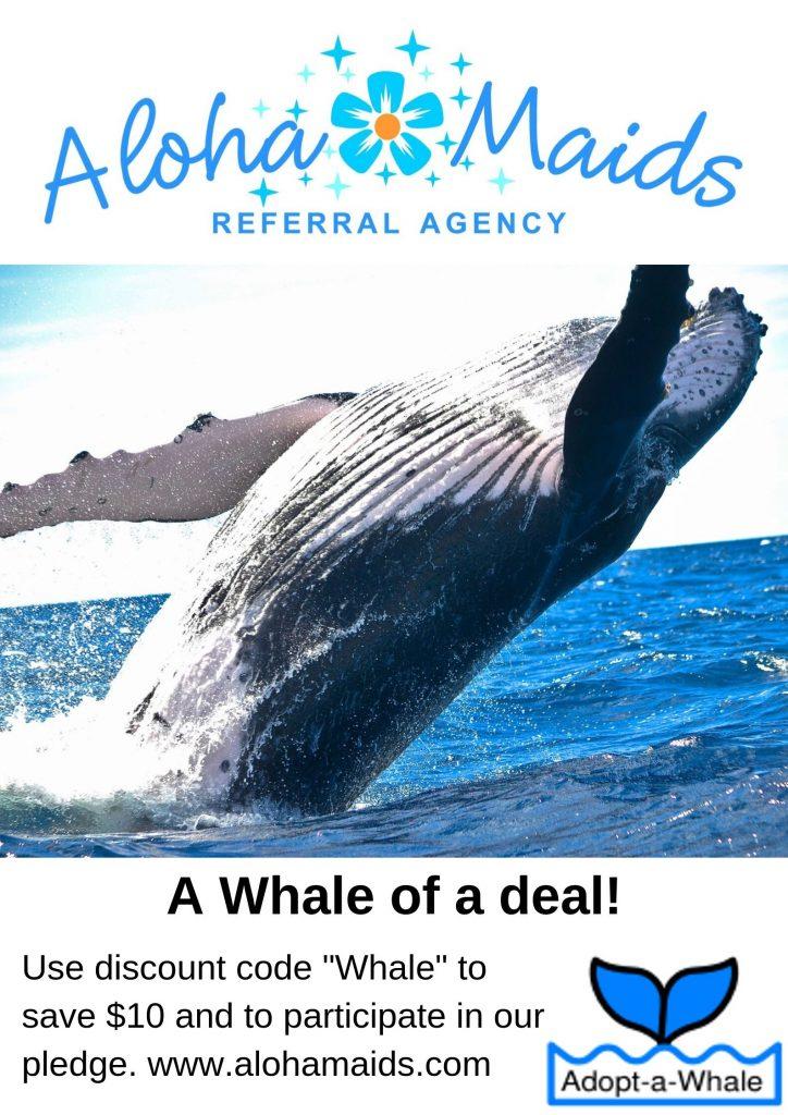 aloha maids house cleaning orange county adopts a new whale: Salt