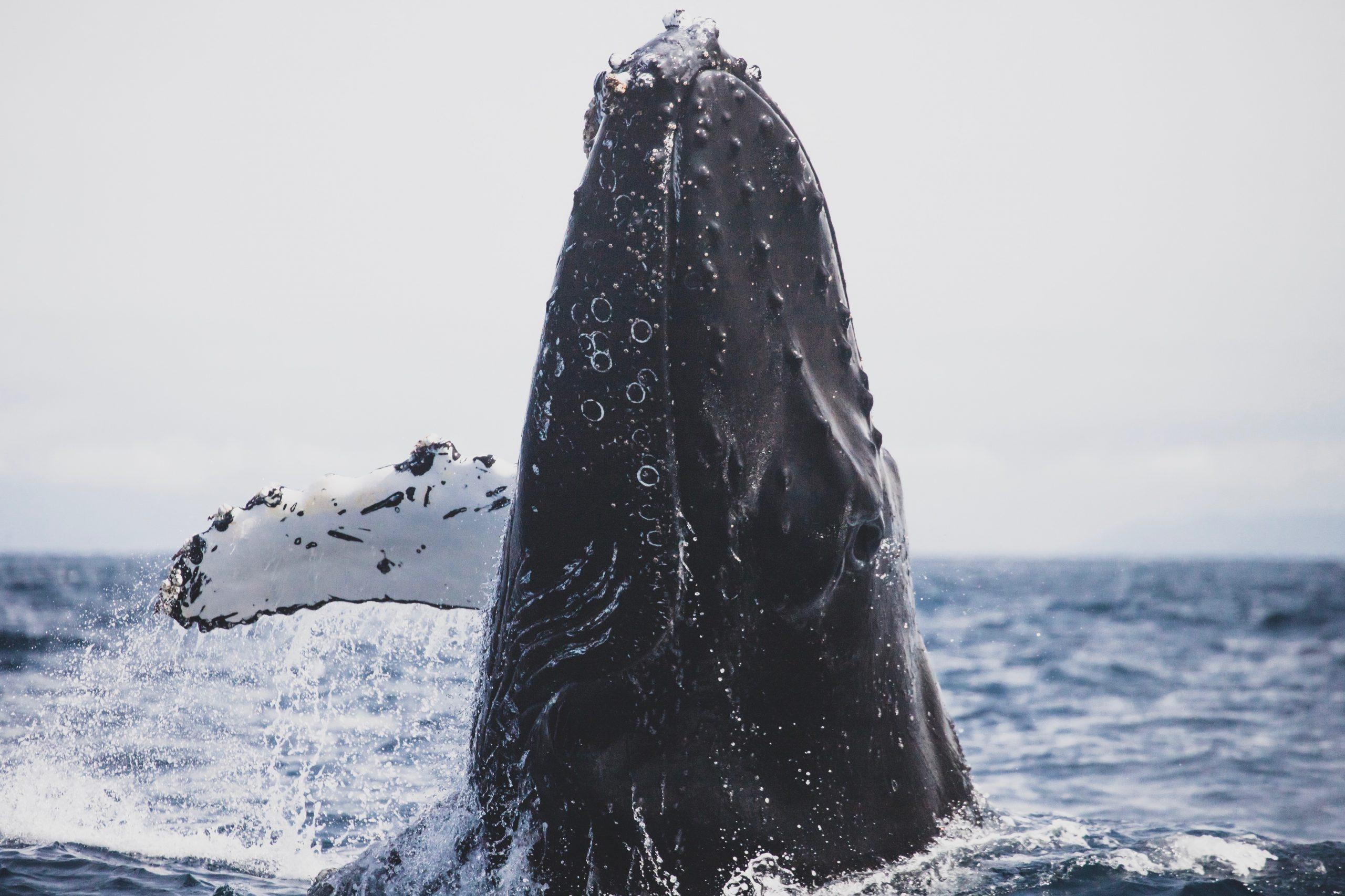 Discount code Whale Aloha Maids